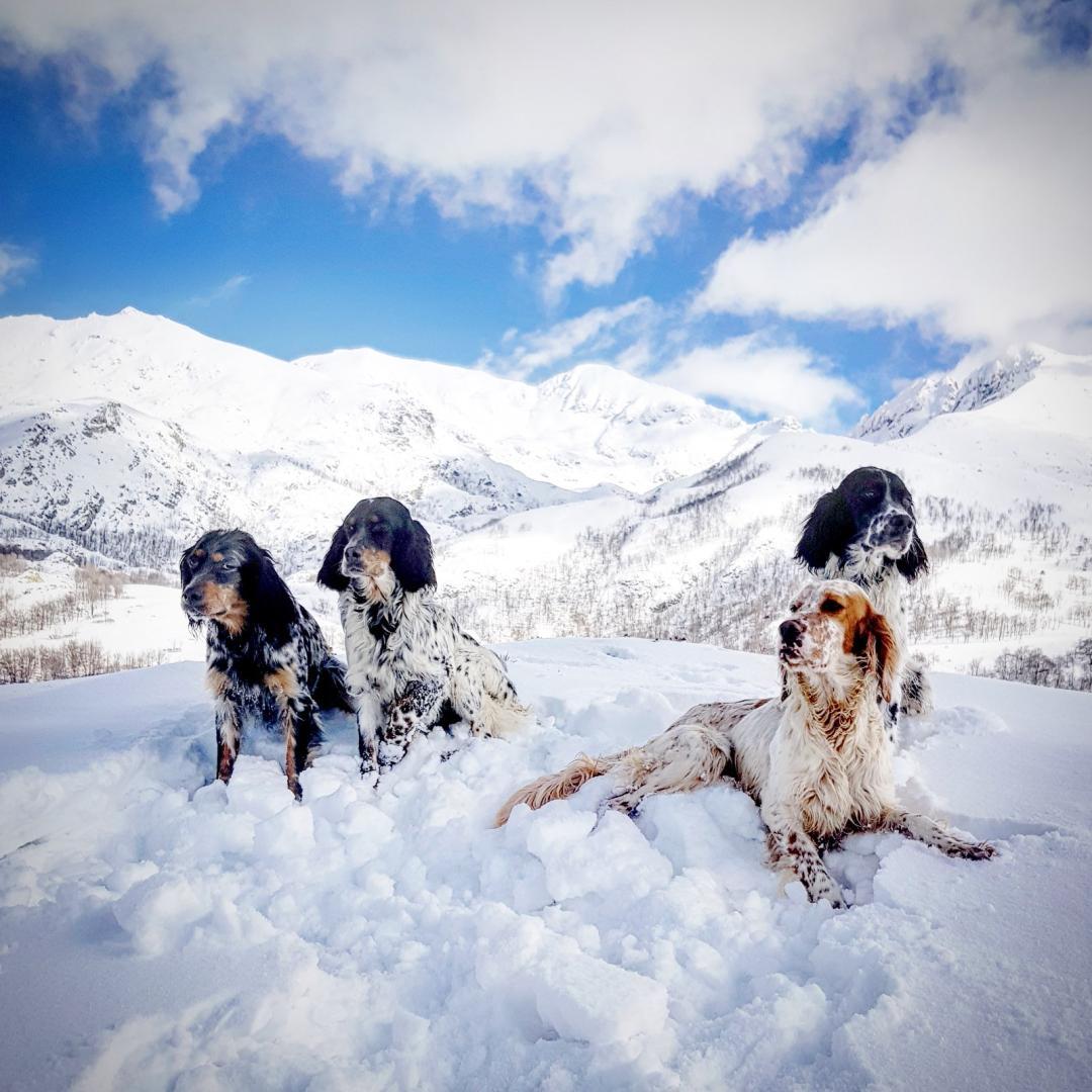 Chiens Corses dans le neige